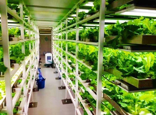 沖縄セルラー電話が運営する植物工場=南城市(同社提供)