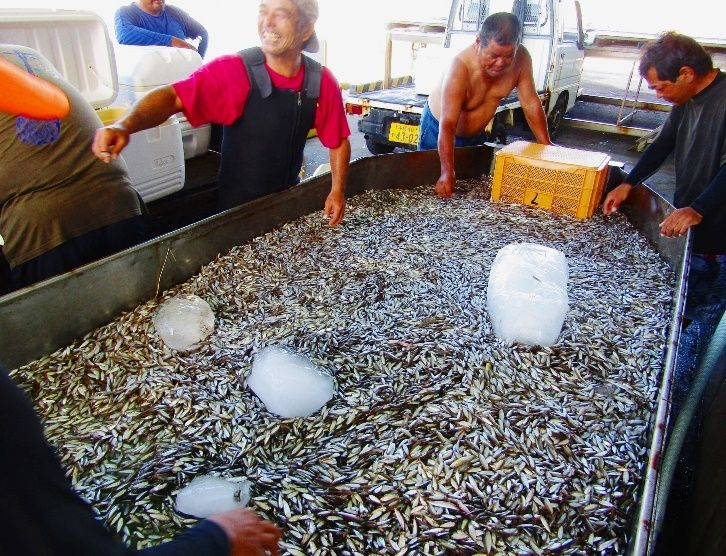 【沖縄】スク水揚げ「5年ぶりの大漁!」 地域の人たちも集まり歓声 (画像あり) [無断転載禁止]©2ch.net->画像>176枚