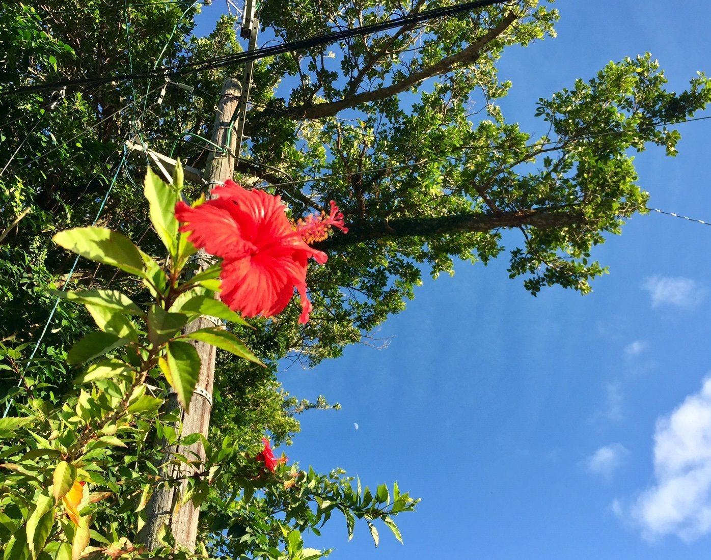 暑い沖縄の秋、戦後最高気温を更新