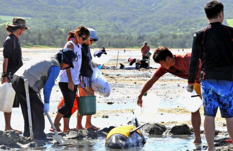 サメに襲われパニック? クジラの群れが浅瀬へ 石垣島で大救出作戦