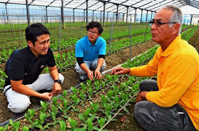 切り花で人気、トルコギキョウ 沖縄からの出荷が3年連続で増えた理由