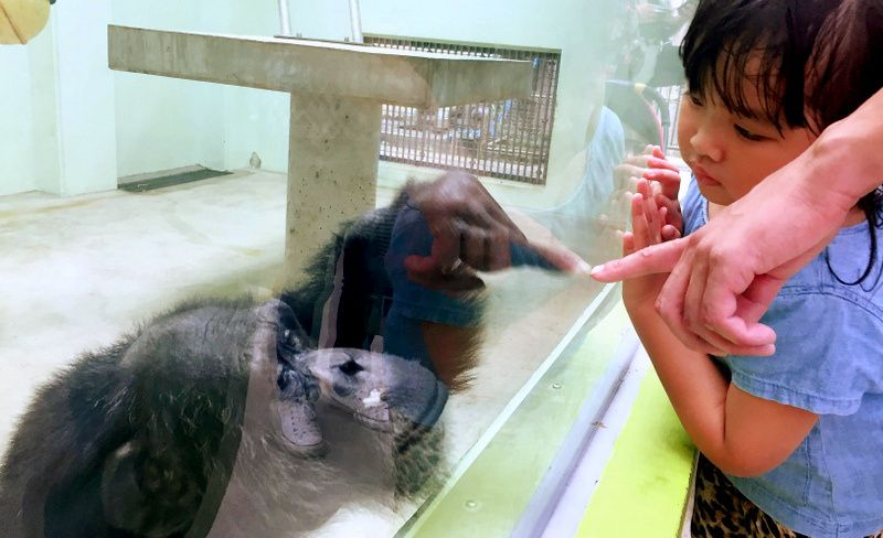 70歳で「モテ期」到来! 沖縄のETチンパンジー、実は人見知り… 【ニュースその後】